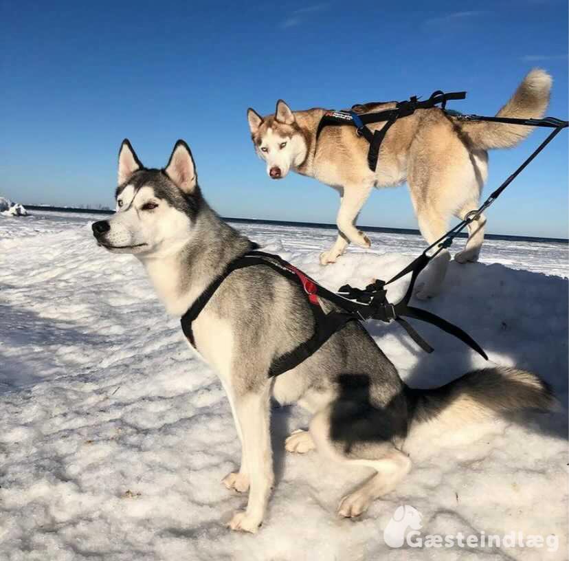 hiking med hund